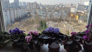 #домашниеЦветы 27.03.2020г.Цветочные новости,что цветет.