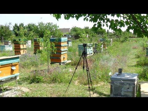 Зачем создан канал Пчела и Пасечник!!!