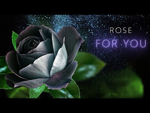 💖 Rose for you💖Best wallpaper images love💖