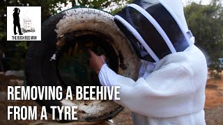Removing a Beehive from a Tyre -  The Bush Bee Man