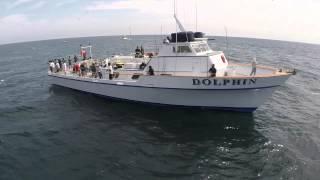 Fisherman's Landing Dolphin Half Day Aerials