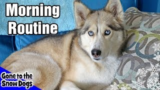My Dog's Morning Routine | Huskies Morning Routine 2018