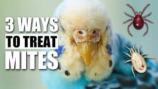 3 Ways to Treat Bird Mites & Lice