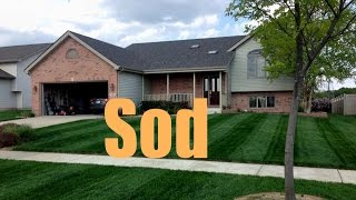 New Sod Fertilizing And Treatment Schedule | New Sod Care