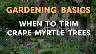 When to Trim Crape Myrtle Trees