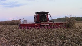 Massive 16 Row Case IH 4416 Corn Head