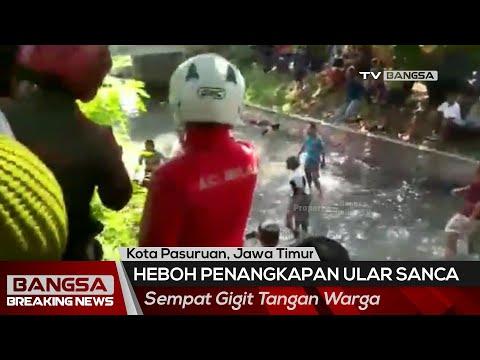 Dramatis! Penangkapan Ular Sanca di Kota Pasuruan, Sempat Gigit Tangan Warga