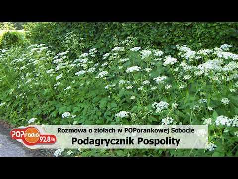 Białoruscy leki na zwiększenie potencji