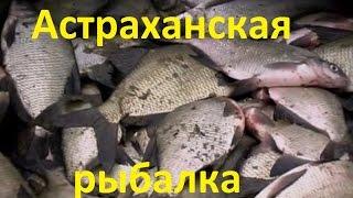 Диалоги о рыбалке рыбалка в астрахани