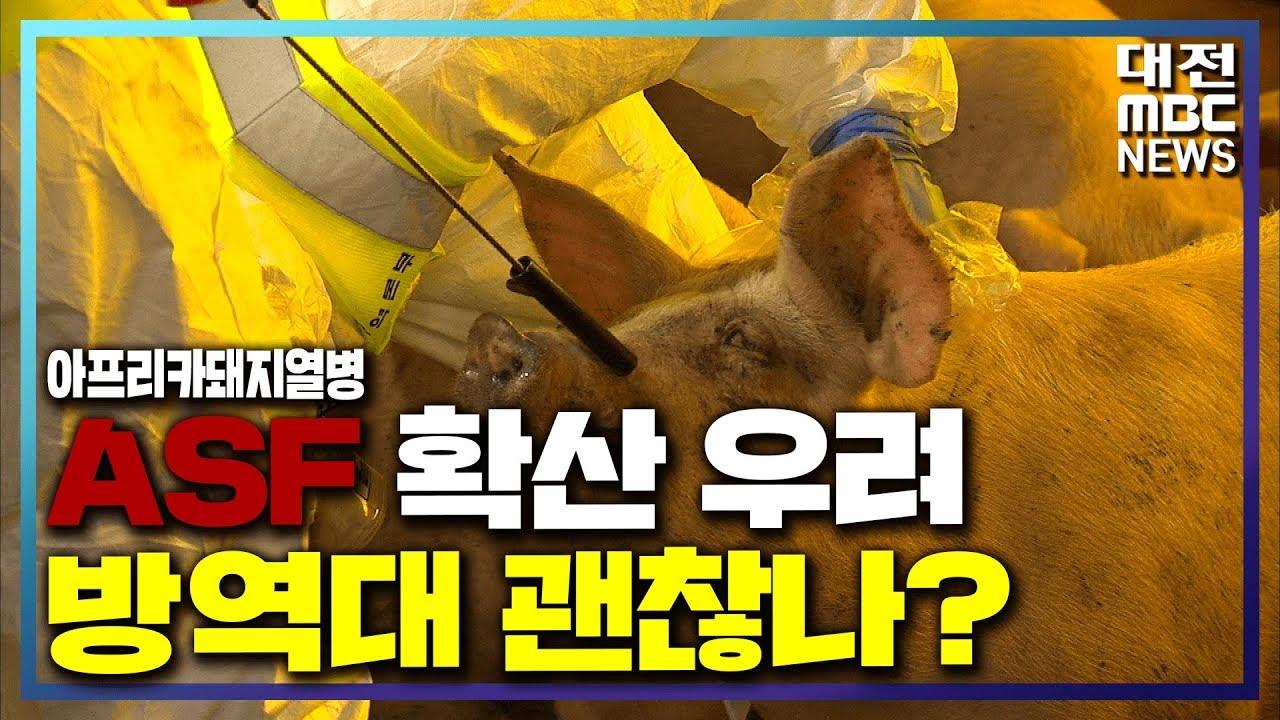 [리포트]ASF 확산 우려..방역대 괜찮나?