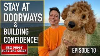 How I'm Coaching THIS PUPPY to Be Good Round EVERYTHING! New Pet Survival Information EP 10