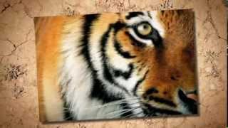 JONI MITCHELL tiger bones
