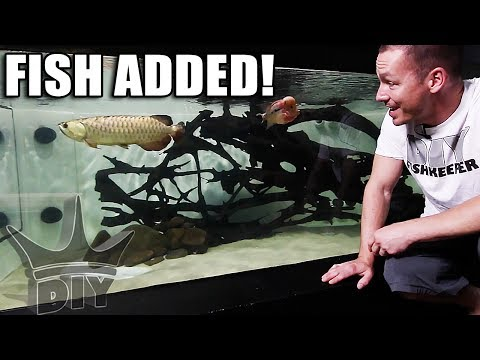 ADDING FISH TO THE 2,000G AQUARIUM