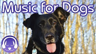 Dog Music Therapy: Calm My Dog with NEW Reggae Music for Dogs! (2018)