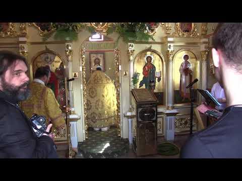 Кедр ливанский для храма соломона
