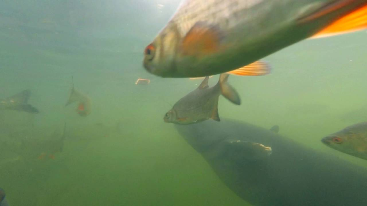 Рыба в Чернобыле. Подводные съемки