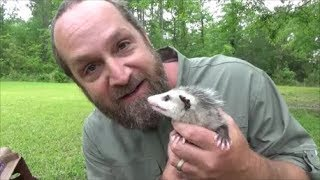 raising baby possums part 1