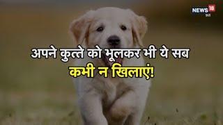 अपने कुत्ते से करते हैं प्यार तो भूलकर ये न खिलाएं!