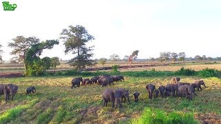 Drone footage captured how amazing elephants are
