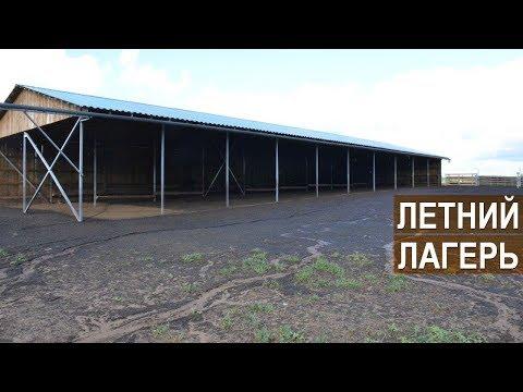 , title : 'Летний лагерь для овец. Баз для овец в КФХ Степаненко.