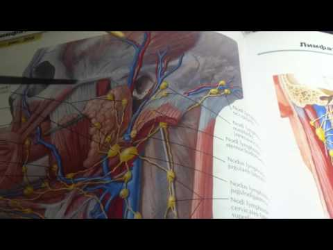 Мази от боли в суставах и мышцах не согревающие