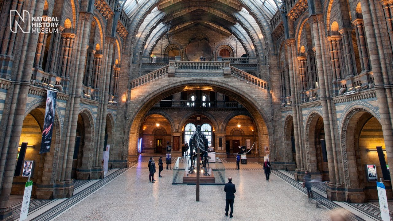 London Natural History Museum Reviews  Family Deals