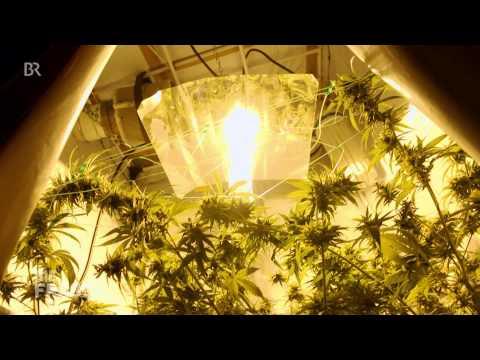 Geheimsache Grasanbau: Ein Homegrower zeigt uns seine Cannabispflanzen || Die Frage