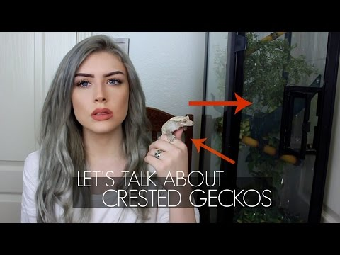 LET'S TALK ABOUT CRESTED GECKOS (Care Guide) Mp3
