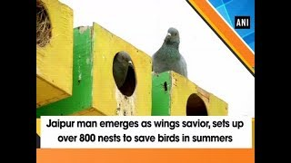 Jaipur man emerges as wings savior, sets up over 800 nests to save birds in summers