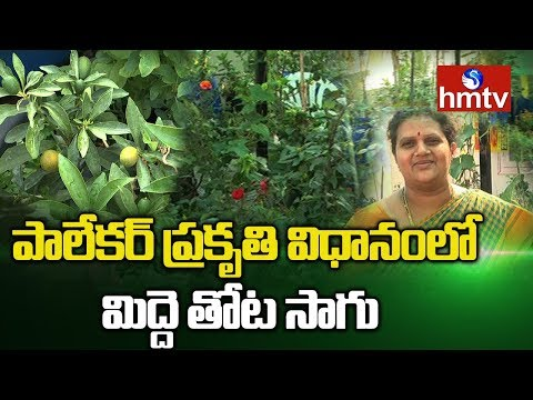 Organic Terrace Garden | Roof Gardening By Venkata Krishna | hmtv Agri