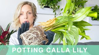 How To Pot Calla Lily Into Lechuza Classico Planter - Green Moments With Juliette Ep #18