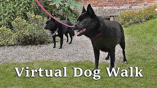 TV for Dogs : Virtual Dog Walk : Dog Walking TV