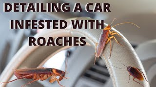 Detailing A Car Infested With Roaches WORST DETAIL EVER | Logan Price