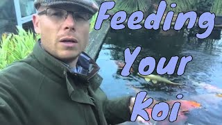 Feeding your Koi | Best time to stop feeding | Any Pond Limited | UK