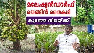 കുള്ളന് തെങ്ങിന് തൈകള് സബ്സിഡി നിരക്കിൽ വിതരണത്തിന്#Malayan Dwarf Coconut Tree #Thengin thai