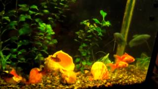 FISH IN MY AQUARIUM 3 (рыбки в моём аквариуме под Andre Fly - Inspiring Lounge Music 8) 1 HOUR