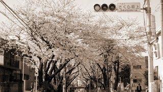 桜坂-福山雅治フル