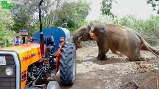 A beautiful Elephant who invaded a village gets a ticket back home (Part 2)