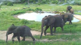 Djuma: Elephant herd of 8 or 9 looking for water and Marula fruit  - 16:26 - 02/24/19
