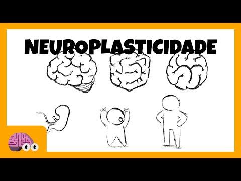 Neuroplasticidade cerebral: O que é e o que não é