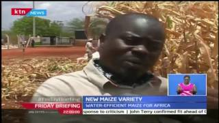 Friday Briefing: New maize variety after shortage of rainfall experienced