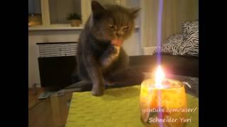Смотреть онлайн Кот, который хочет съесть огонь