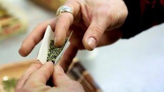 La culture du cannabis autorisée aux Pays-Bas