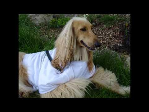 IV. ročník akce Moninec patří psům
