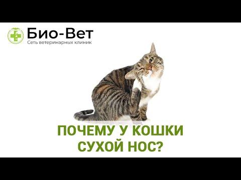У Кошки Сухой Нос 🙀 - Почему и Что Это Значит // Сеть Ветклиники БИО-ВЕТ