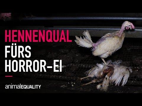 Hennenqual fürs Horror-Ei