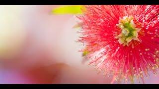 撮影会「讃岐まんのう公園で6月の花々を撮ろう!(香川)」講評会