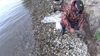 Ловля сомов с берега на волге