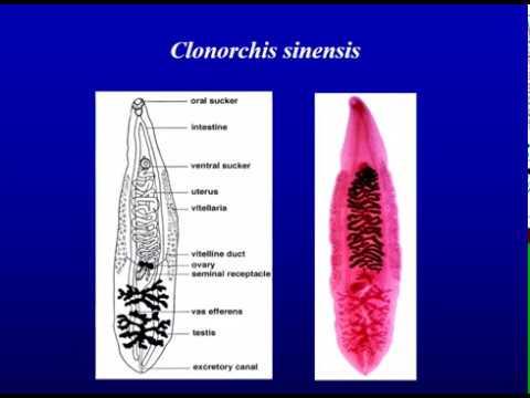 Cancer colon tumor markers