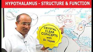 Hypothalamus - Structure & Function - Neuroanatomy